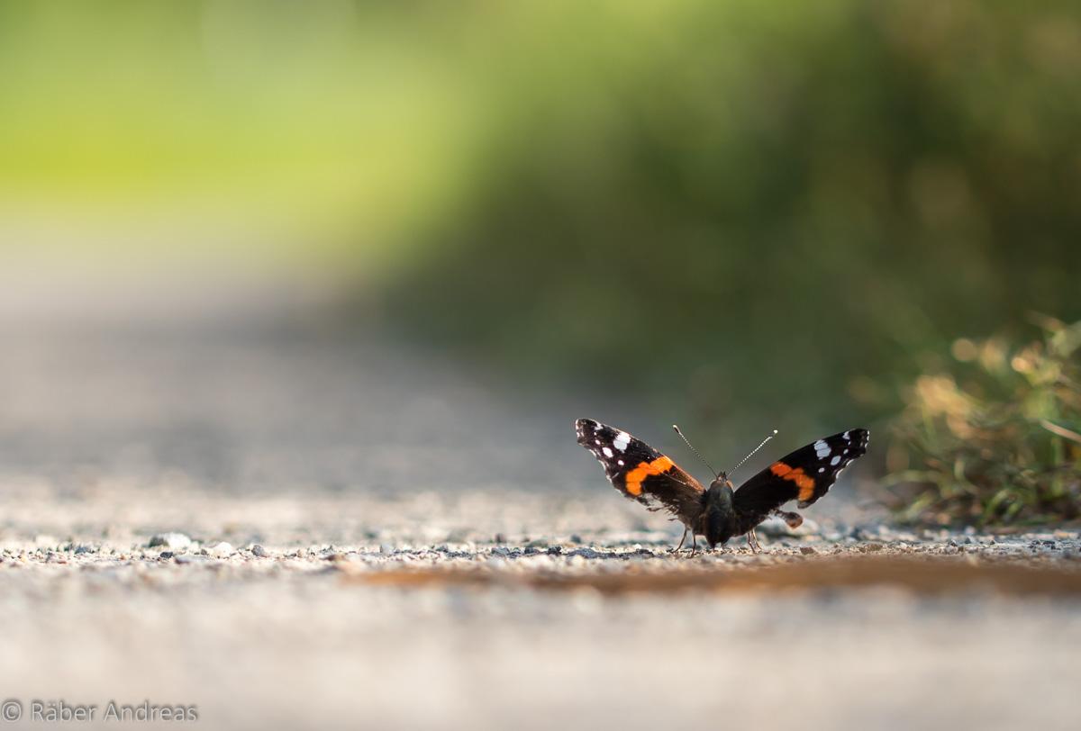 Natur neu entdecken: Achtsamkeit steigern, Stress bewältigen